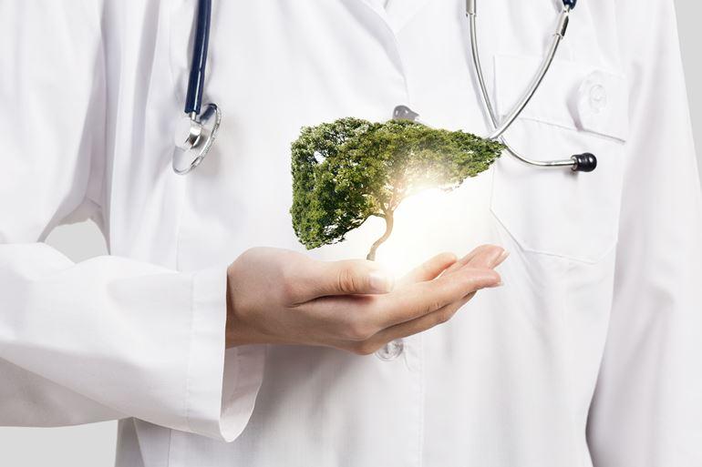 Egy máj alakú fa egy orvos kezében